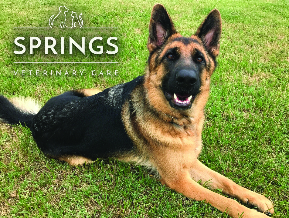 Springs Veterinary Care Fall Pet Photo Contest